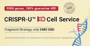Gene-KO cell line
